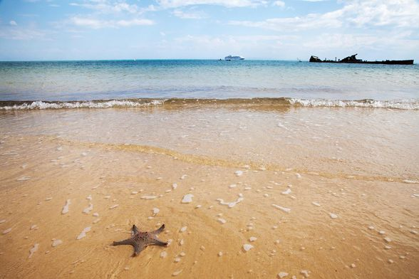 Discover sealife in the ocean