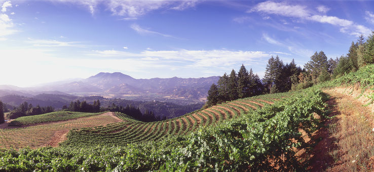 What to sip and savor in Napa Valley