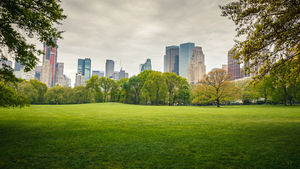 Greenspace in New York City's Central Park