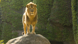 The Kovler Lion House at Lincoln Park Zoo
