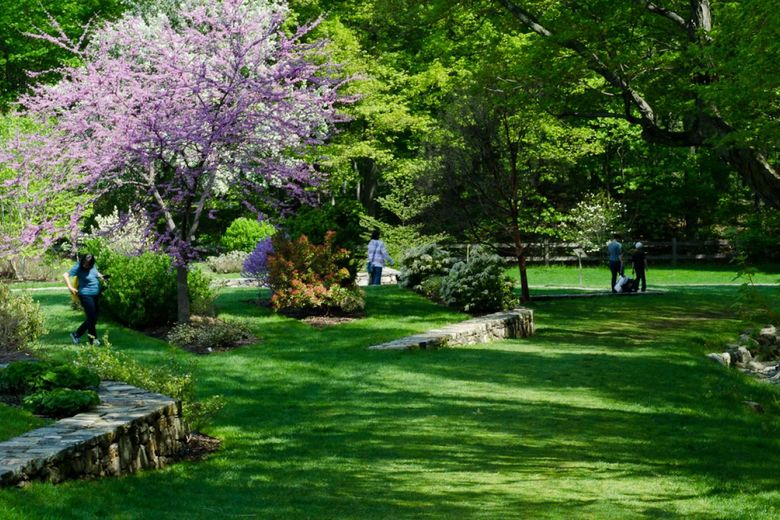 The Arnold Arboretum is maintained by Harvard University and designed to look like a natural landscape instead of a botanical garden | WhereTraveler